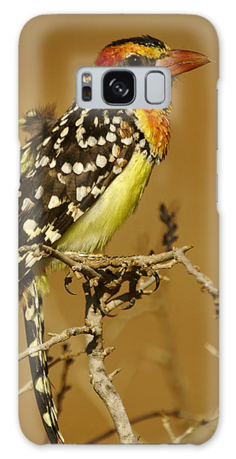 Africa Galaxy S8 Case featuring the photograph Red And Yellow Barbet by Michele Burgess