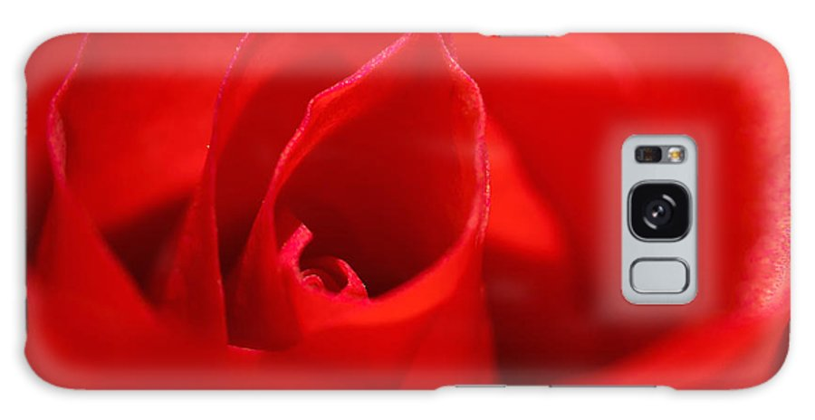 Rose Galaxy S8 Case featuring the photograph Red Rose by Svetlana Sewell