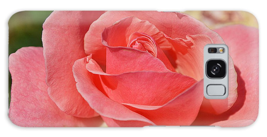 Rose Galaxy S8 Case featuring the photograph Shining For You by Felicia Tica