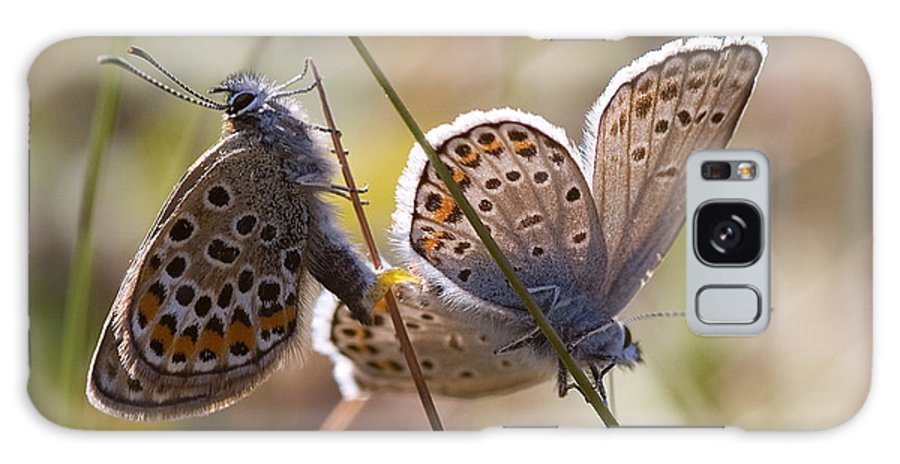 Butterfly Galaxy S8 Case featuring the photograph Silver-studded Blue Butterflies by Bob Kemp