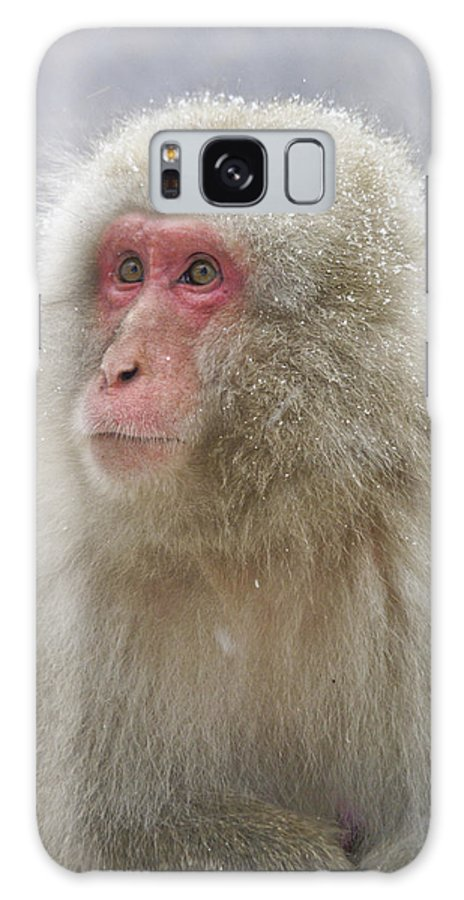 Japan Galaxy S8 Case featuring the photograph Snow-dusted Monkey by Michele Burgess