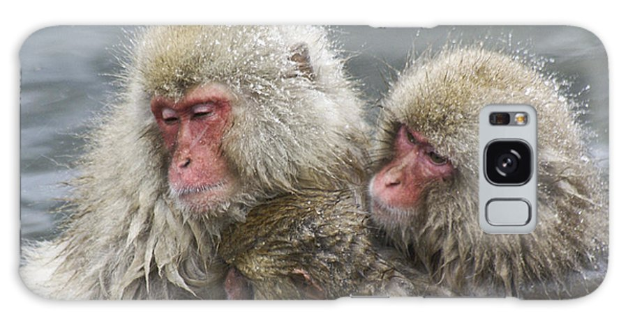 Snow Monkey Galaxy S8 Case featuring the photograph Snuggling Snow Monkeys by Michele Burgess