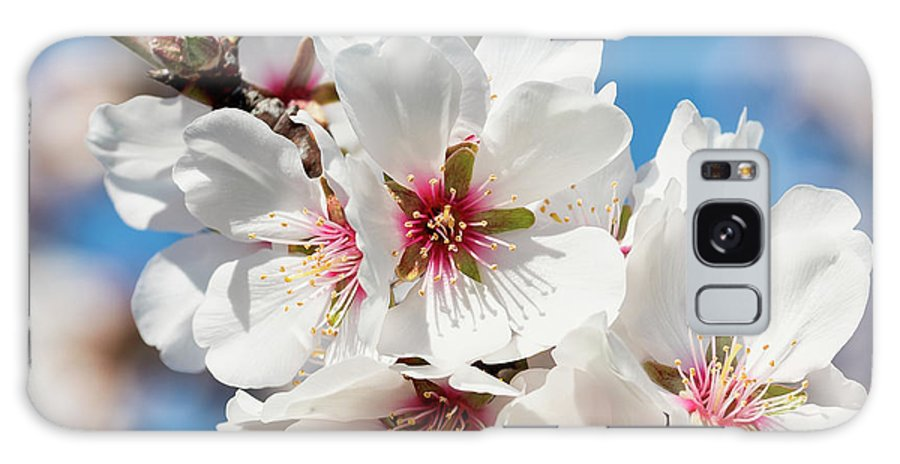 Galaxy S8 Case featuring the photograph Spring Blossoms by Doug Holck