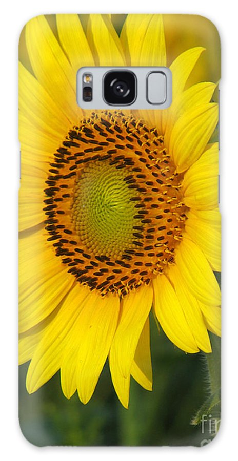 Sunflowers Galaxy Case featuring the photograph Sunflower by Amanda Barcon