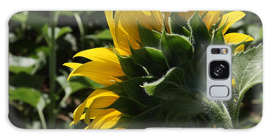 Sunflower Galaxy S8 Case featuring the photograph Sunflower Series 09 by Amanda Barcon
