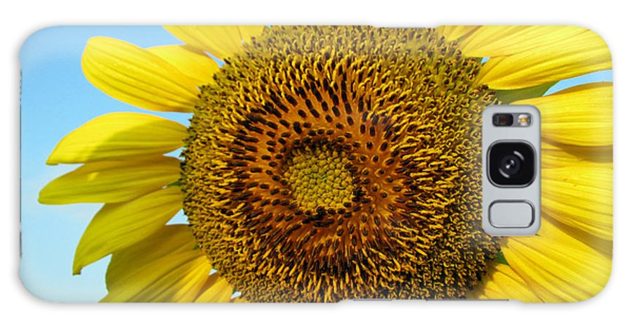 Sunflower Galaxy S8 Case featuring the photograph Sunflower Series by Amanda Barcon