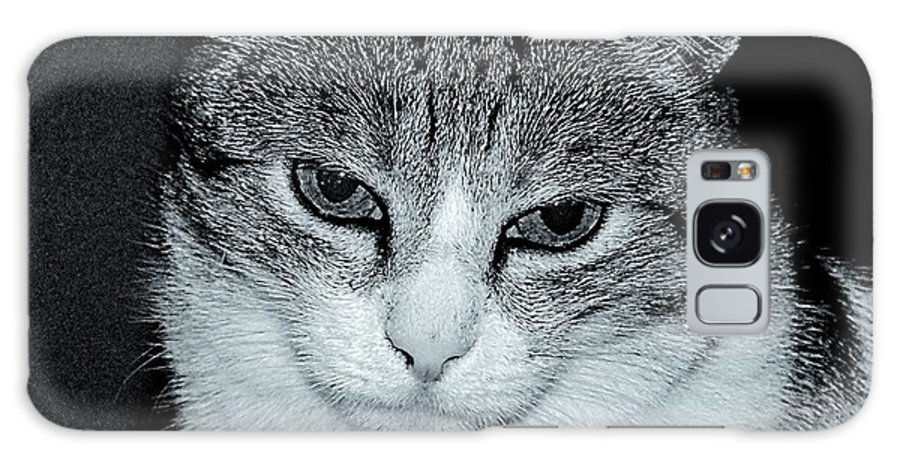 Cat Galaxy S8 Case featuring the photograph The Cat's Innocense by Gianni Bussu