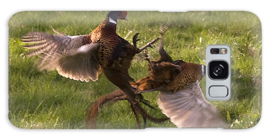 Pheasant Galaxy S8 Case featuring the photograph The Sparring by Angel Ciesniarska