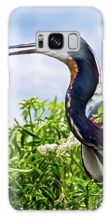 Bird Galaxy S8 Case featuring the photograph Tri-colored Heron by Christopher Holmes