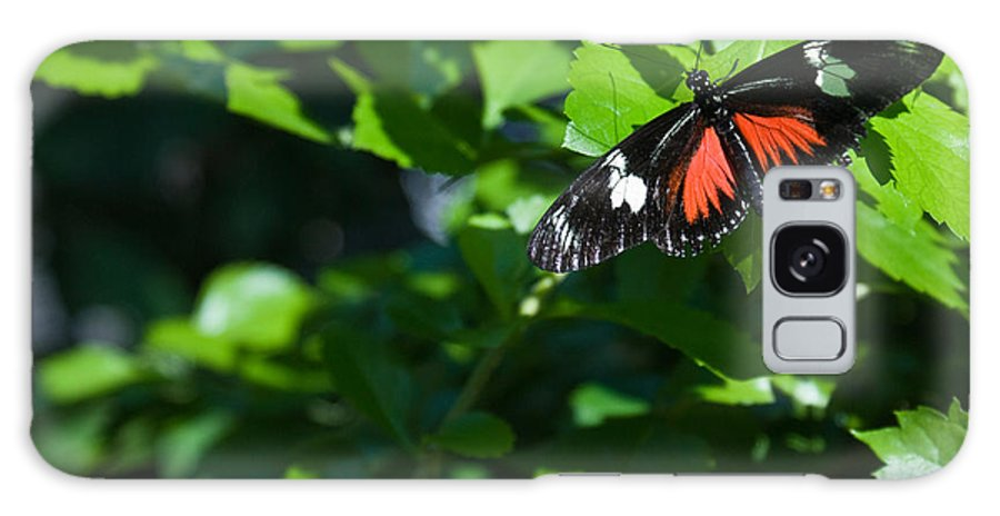 Tropical Galaxy S8 Case featuring the photograph Tropical Butterfly by Douglas Barnett