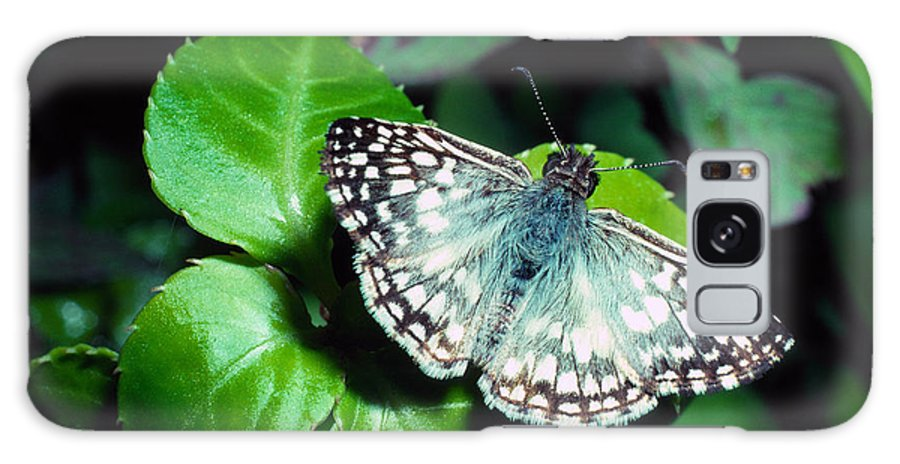 Tropical Checkered Skipper Galaxy S8 Case featuring the photograph Tropical Checkered Skipper by Thomas R Fletcher