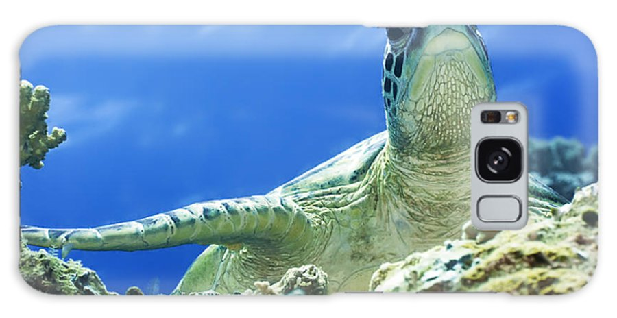 Turtle Galaxy S8 Case featuring the photograph Turtle by MotHaiBaPhoto Prints