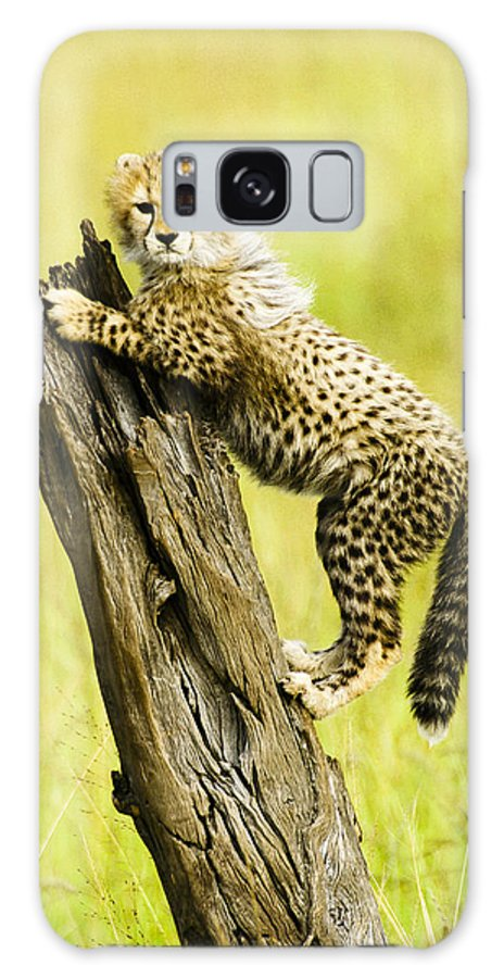 Africa Galaxy S8 Case featuring the photograph What A Cutie by Michele Burgess