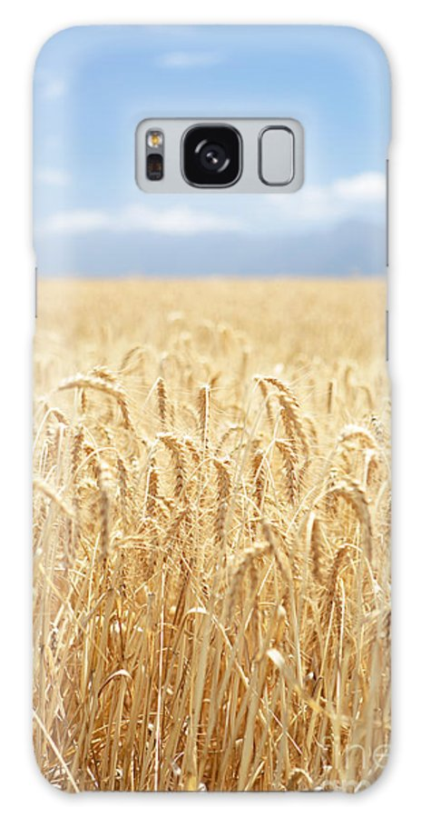 Wheat Galaxy S8 Case featuring the photograph Wheat Field by Neil Overy