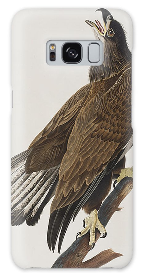 White Headed Eagle Galaxy S8 Case featuring the painting White-headed Eagle by John James Audubon
