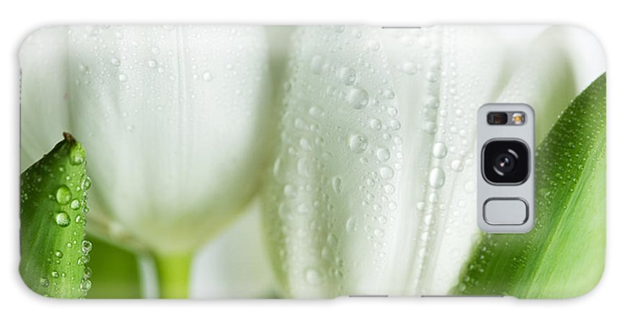 Dew Galaxy Case featuring the photograph White Tulips by Nailia Schwarz
