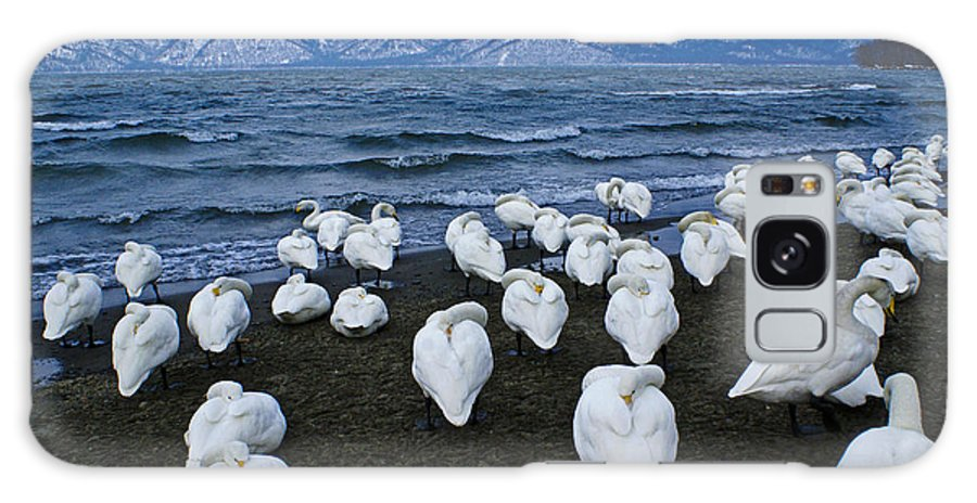 Japan Galaxy S8 Case featuring the photograph Whooper Swans In Winter by Michele Burgess
