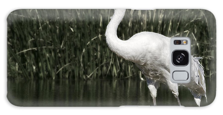 Whooping Galaxy S8 Case featuring the photograph Whooping Crane by Al Mueller