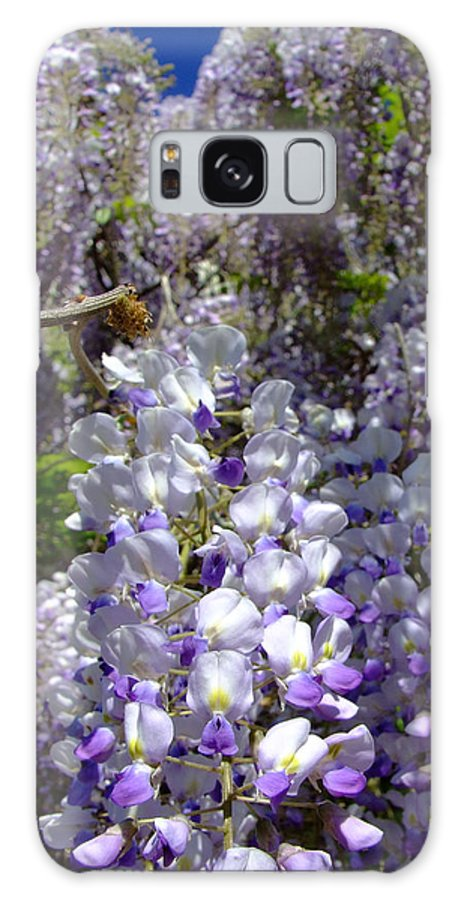 Wisteria Galaxy S8 Case featuring the photograph Wisteria Cascading by Everett Bowers