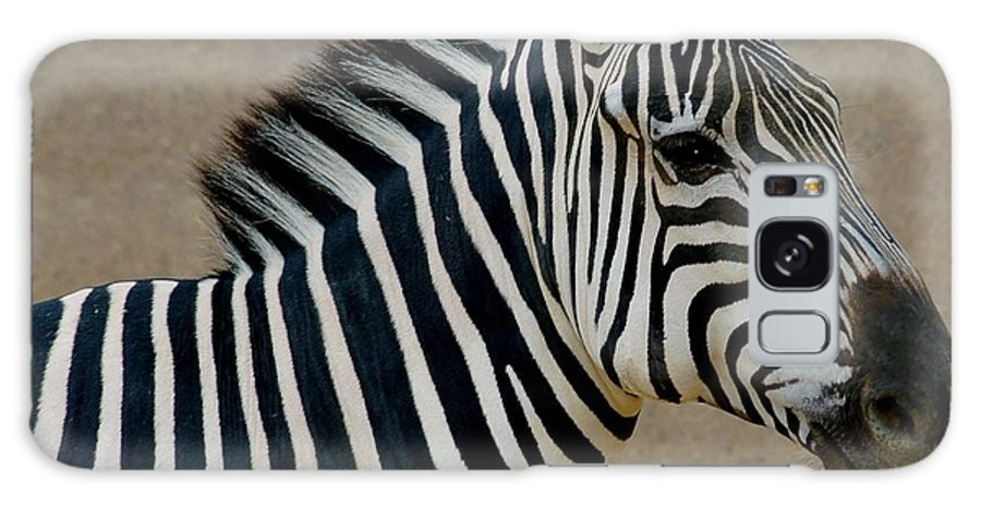 Animals Galaxy S8 Case featuring the photograph Zebra by D Nigon