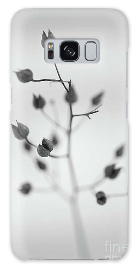 Dry Galaxy S8 Case featuring the photograph Untitled by Gabriela Insuratelu