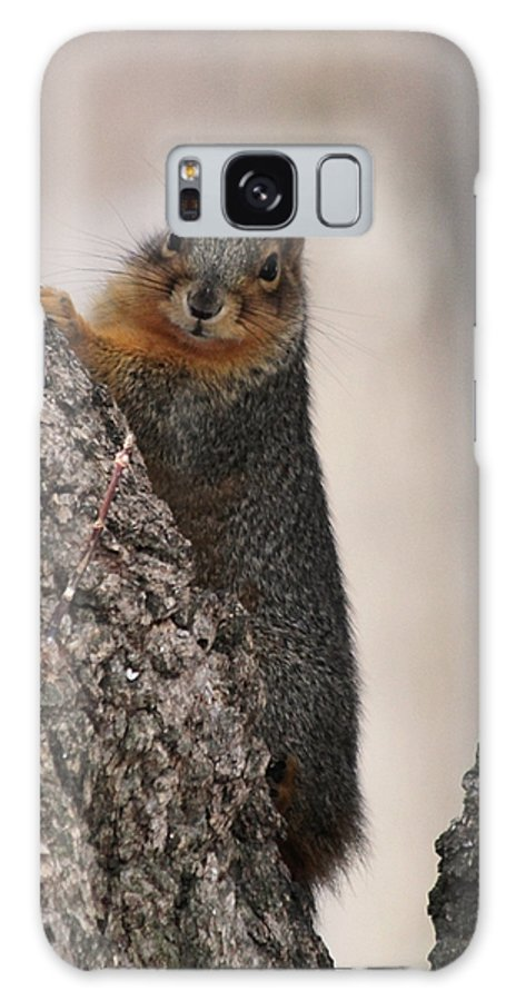 Squirrel Galaxy S8 Case featuring the photograph Squirrel by Lori Tordsen