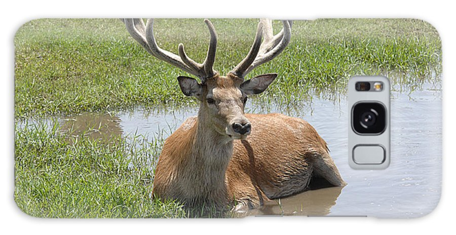 Deer Galaxy S8 Case featuring the photograph 12 Point Buck by Keith Lovejoy