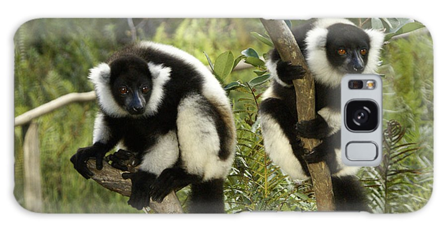 Madagascar Galaxy S8 Case featuring the photograph Black And White Ruffed Lemur by Michele Burgess