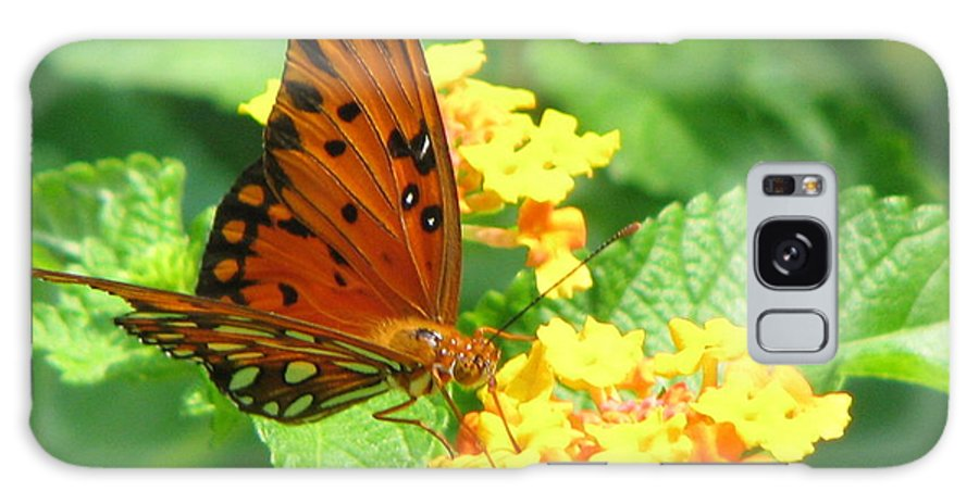 Butterfly Galaxy S8 Case featuring the photograph Butterfly by Amanda Barcon