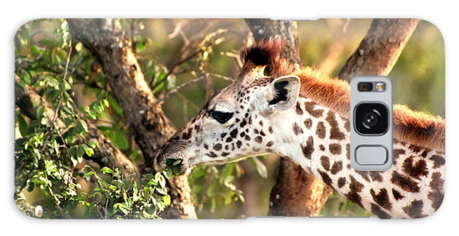 Giraffe Galaxy S8 Case featuring the photograph Giraffe by Sebastian Musial