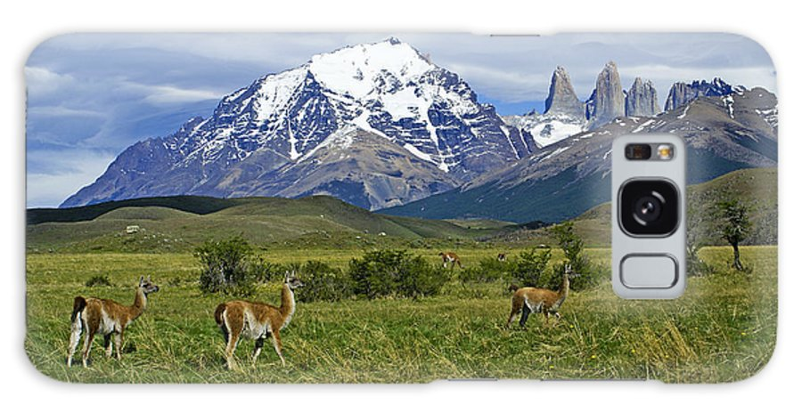 Patagonia Galaxy S8 Case featuring the photograph Guanacos In Torres Del Paine by Michele Burgess