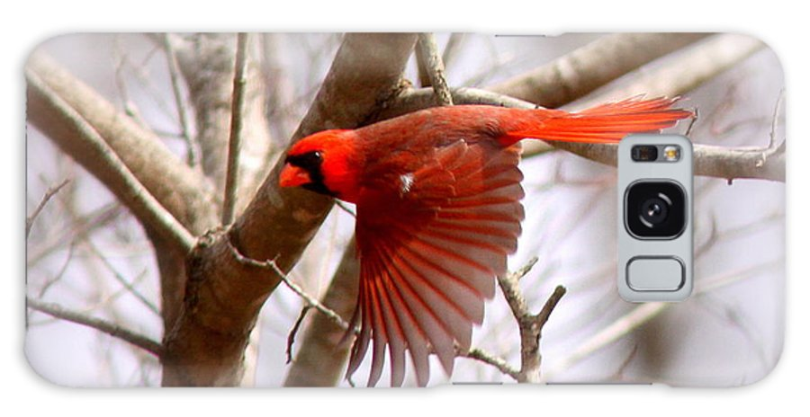 Northern Cardinal Galaxy S8 Case featuring the photograph Img_0001 - Northern Cardinal by Travis Truelove