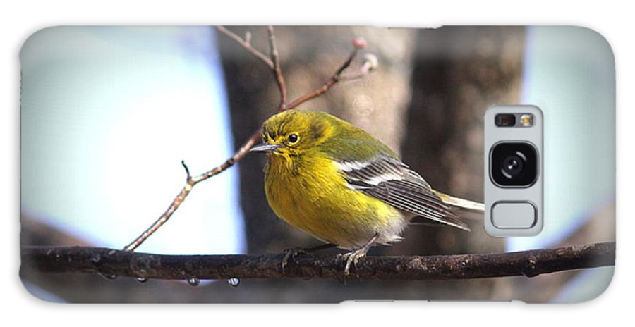 Pine Warbler Galaxy S8 Case featuring the photograph Img_0001 - Pine Warbler by Travis Truelove