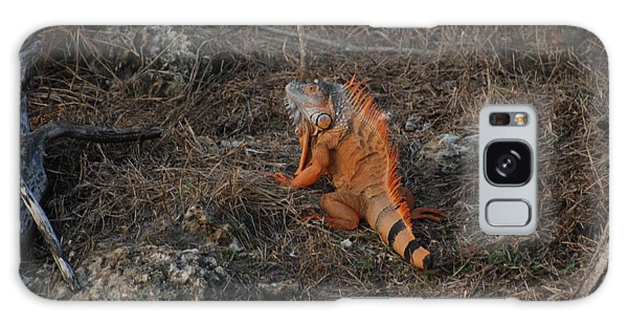 Brush Galaxy S8 Case featuring the photograph Orange Iguana by Rob Hans