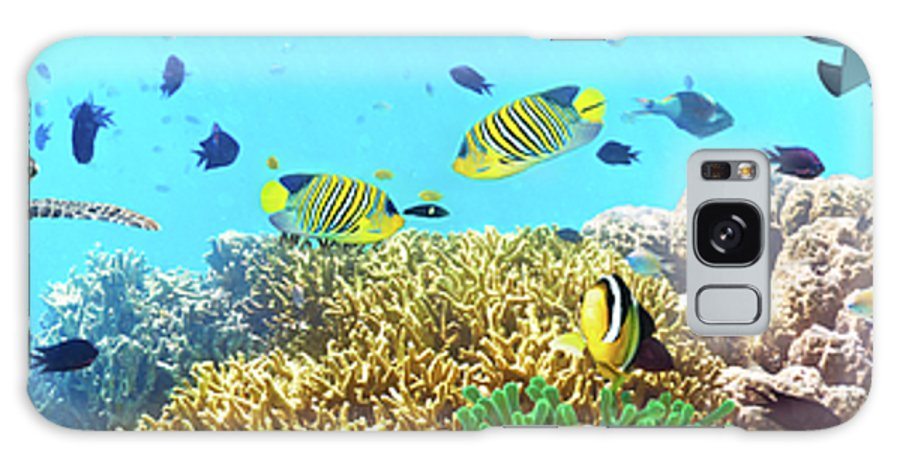 Butterflyfish Galaxy S8 Case featuring the photograph Underwater Panorama by MotHaiBaPhoto Prints
