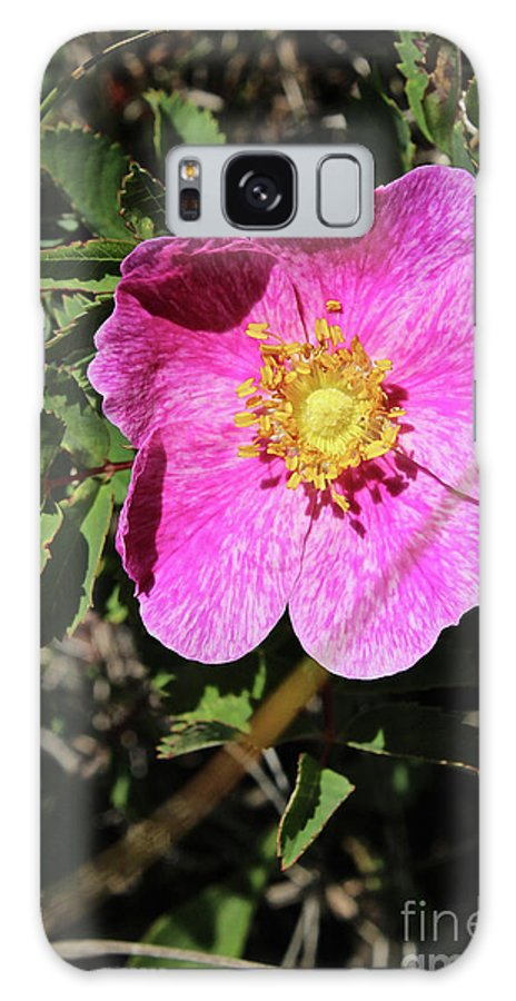 Wild Galaxy S8 Case featuring the photograph Wild Rose by Ann E Robson
