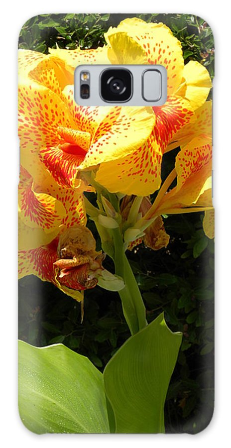 Flower Galaxy S8 Case featuring the photograph Yellow Canna Lily by Terri Mills