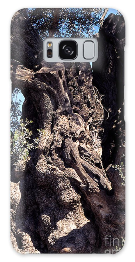2000 Year Old Olive Tree Galaxy S8 Case featuring the photograph 2000 Year Old Olive Tree by Thomas R Fletcher