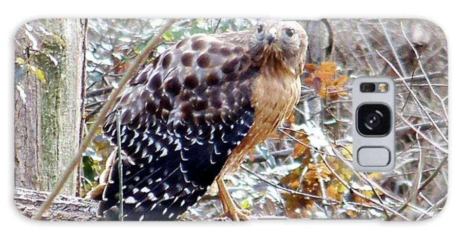 Hawk Galaxy S8 Case featuring the photograph 2005-hawk And Snake by Martha Abell