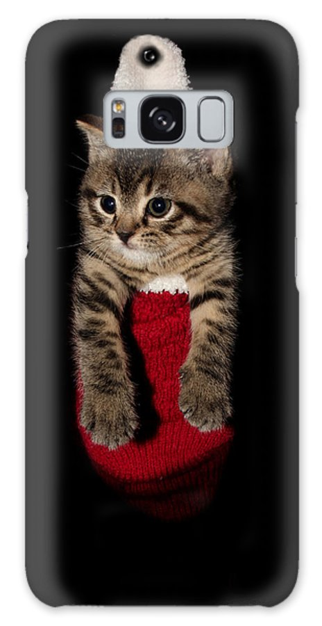 Animal Galaxy S8 Case featuring the photograph 2010 Stocking Cat 2 by Robert Morin
