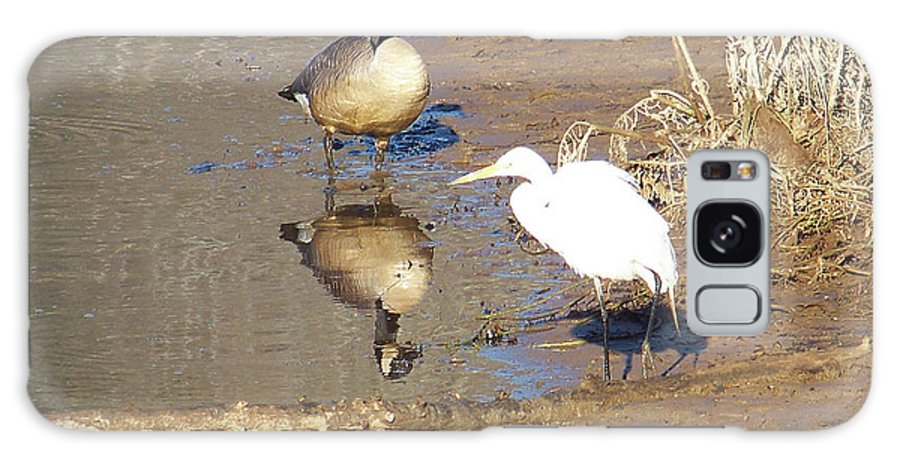 Birds Galaxy S8 Case featuring the photograph 2012-white Crane And Canadian Goose by Martha Abell