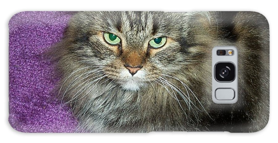 Maine Coon Galaxy S8 Case featuring the photograph Maine Coon Cat by Michael Munster