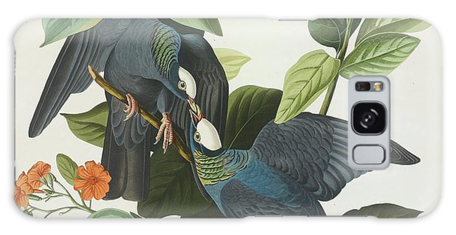 John James Audubon (after) White-crowned Pigeon (plate Clxxvii) Galaxy S8 Case featuring the painting Crowned Pigeon by John James