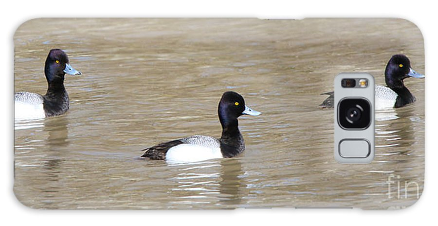 Jack Schultz Photography Galaxy S8 Case featuring the photograph 3 Greater Scaup 4060 by Jack Schultz