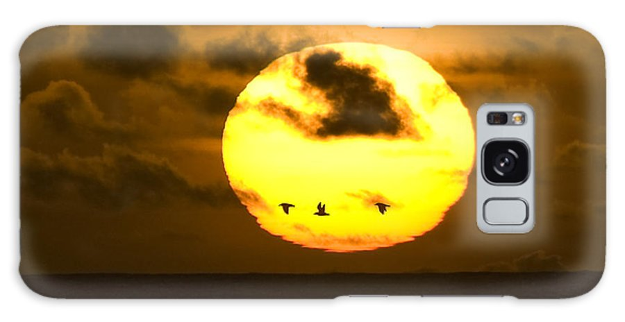 Sun Galaxy S8 Case featuring the photograph 3 Gulls by Larry Keahey