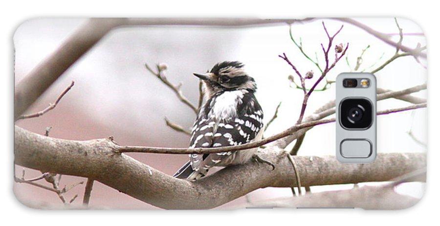 Downy Woodpecker Galaxy S8 Case featuring the photograph Img_0001 - Downy Woodpecker by Travis Truelove
