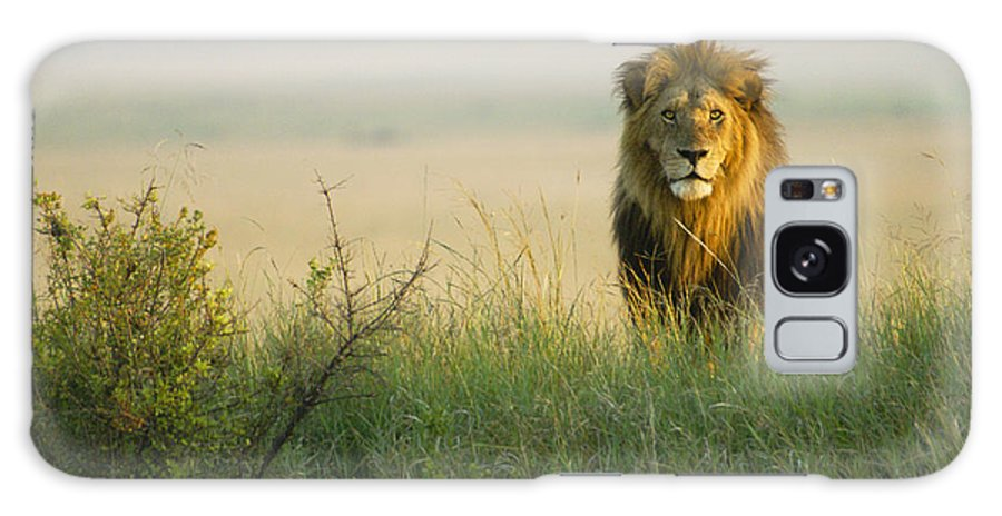 Lion Galaxy S8 Case featuring the photograph King Of The Savanna by Michele Burgess