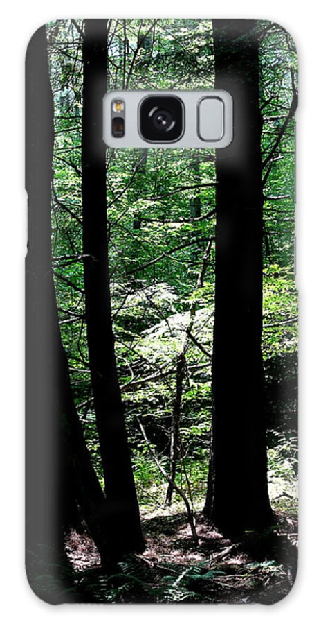 Forest Galaxy S8 Case featuring the photograph Tree Silhouette by Brian Lucia