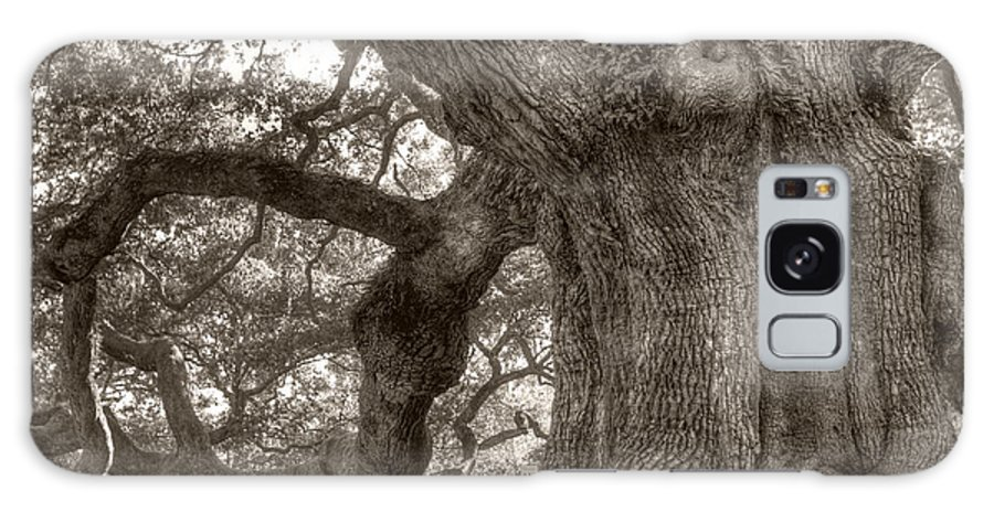 Live Oak Galaxy S8 Case featuring the photograph Angel Oak Live Oak Tree by Dustin K Ryan
