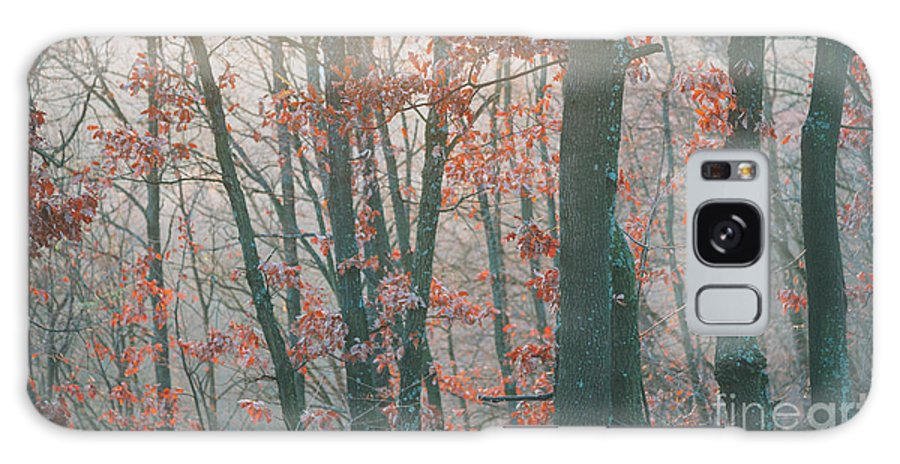 Landscape Galaxy S8 Case featuring the photograph Autumn Forest by Jelena Jovanovic